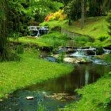 Beautiful stream Stock Image