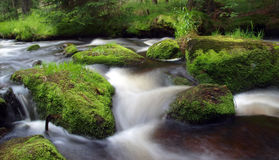 Beautiful stream. Stream in the forest surrounded by stones covered by moss Stock Photography