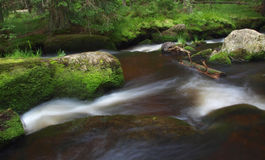 Beautiful stream. Stream in the forest surrounded by stones covered by moss Stock Images