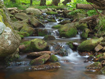 Beautiful stream. Stream in the forest surrounded by stones covered stock photography