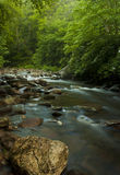 Beautiful stream Royalty Free Stock Photo