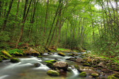 Beautiful stream. In the forest Royalty Free Stock Photo