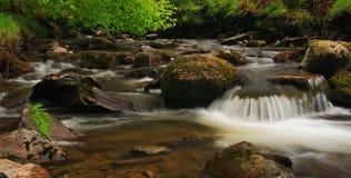 Beautiful stream Stock Photo