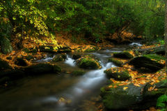 Beautiful Stream Royalty Free Stock Photos