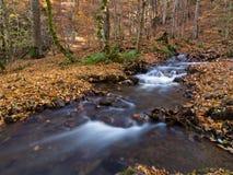Beautiful Stream and Autumn at Yedigoller, Turkey Royalty Free Stock Photos
