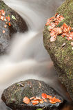 Beautiful stream flowing through Autumn Fall rocks Stock Photos