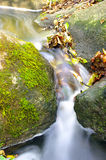 The beautiful stream in forest Stock Images