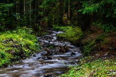 Beautiful stream in forest. The river is a slice of mellow harmony amid the fragrant leaves Stock Photography