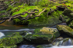 Beautiful stream in the mountains Stock Photography