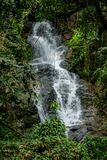 Beautiful stream waterfall run on the rocks in the jungle. Green forest. Scenic water fall in the greenery at sunny day Stock Photo
