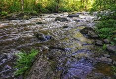 Beautiful  streaming river and forest scene. Beautiful  streaming river and  growing in riverbank scene. beautiful  streaming river and waterfall and rocks in stock image