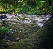 Beautiful  streaming river and forest scene. Beautiful  streaming river and  growing in riverbank scene. beautiful  streaming river and waterfall and rocks in royalty free stock images