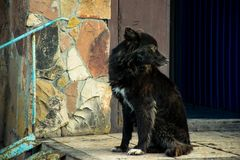 Beautiful black dog by the stone wall stock photography