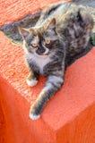 Beautiful street cat Stock Image