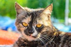 Beautiful street cat Royalty Free Stock Image