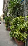 Beautiful street, flower pots with green plants near the gray stone wall, Italy, MILAN.  stock photos