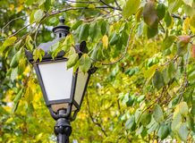 A beautiful street lighting lantern is among the trees with green and yellow leaves on the blurred green background. In the park in autumn we see in the photo royalty free stock photography