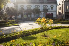 Beautiful street in city Viseu, Portugal. Beautiful street with small tree in flowers in city Viseu, Portugal Royalty Free Stock Images