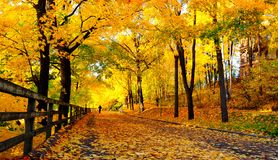 Beautiful Streets Of Fall Royalty Free Stock Photography