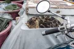 Beautiful striped cat sleeping in old fishing boat. Croatia, Rovinj. Beautiful striped cat sleeping in a tarpaulin covered old fishing boat. Croatia, Rovinj Royalty Free Stock Images