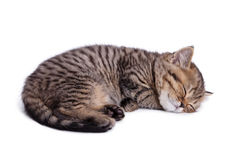 Beautiful striped kitten Royalty Free Stock Photo