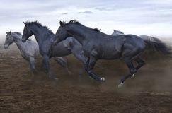 Beautiful strong loose horses are irresistible in their running stock images