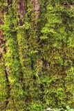 Just bark on a tree. Stock Photos