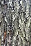 Just bark on a tree. Royalty Free Stock Photos