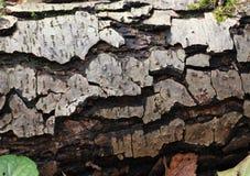 Just bark on a tree. Stock Photo
