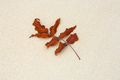 Beautiful structured leaves at Royalty Free Stock Photography