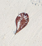 Beautiful structured leaves at Stock Photo