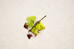 Beautiful structured leaves at the beach arranged by nature Royalty Free Stock Image
