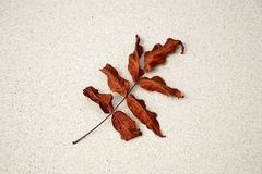 Beautiful structured leaves at the beach arranged by nature in a Stock Photo