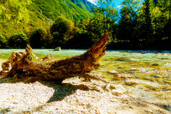 Beautiful structured wooden log on sandy river shore in summer mountain landscape Stock Photo