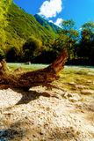 Beautiful structured wooden log on sandy river shore in summer mountain landscape Stock Images