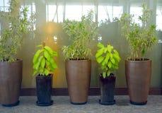 Flower pots unique design photograph. Isolated unique clay made flower pots stock Stock Photo