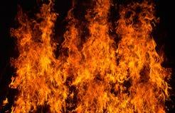 Beautiful stylish fire flames Stock Images