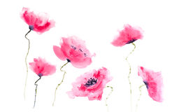Beautiful stylized red poppy flowers on white background Royalty Free Stock Photo