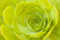 Beautiful Succulent Abstract Royalty Free Stock Images