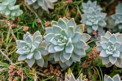 Overhead view of succulents in greenhouse royalty free stock photo
