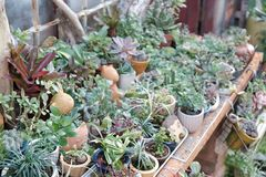 Beautiful succulent plants in garden. Some beautiful succulent plants in garden and grow up very well Royalty Free Stock Photography