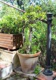 Beautiful succulent plants Royalty Free Stock Photos