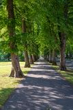 Beautiful summer alley in park with old trees stock images