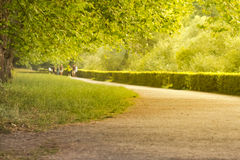 Beautiful summer alley. The warm summer sun shines through the trees of a wonderful avenue Stock Photos