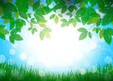 Beautiful summer background. Beautiful background for your design stock illustration