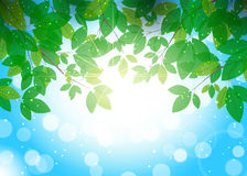 Beautiful summer background with leaves on branche. Beautiful background for your design vector illustration
