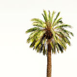 Beautiful Summer Background with Palm Tree in the tropics with c Royalty Free Stock Images