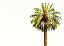 Beautiful Summer Background with Palm Tree in the tropics with c Stock Photo