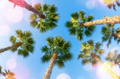 Beautiful summer background with palm trees. royalty free stock image