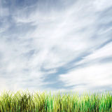 Beautiful summer background with sky and grass. Beautiful summer background with sky and green grass Stock Images